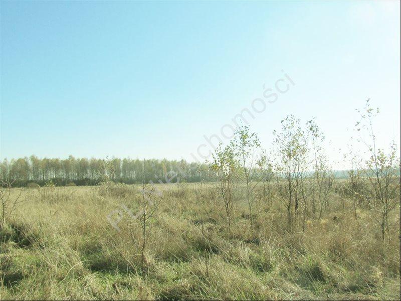 Działka rolna na sprzedaż Tyborów  30000m2 Foto 5
