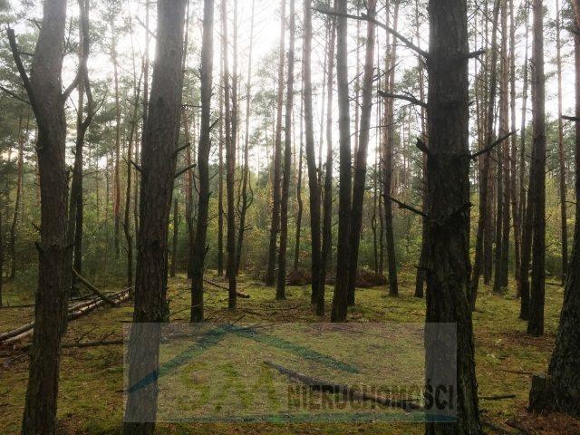 Działka leśna na sprzedaż Serock, las  3000m2 Foto 4