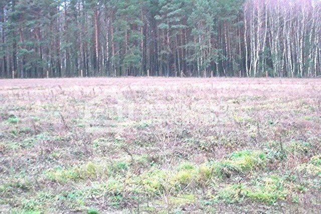 Działka leśna na sprzedaż Strzeczona  129577m2 Foto 6