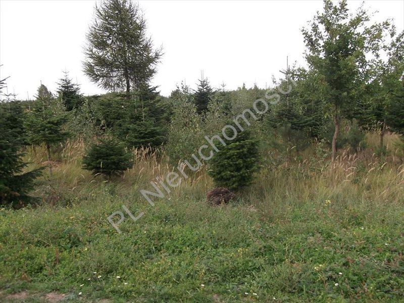 Działka rolna na sprzedaż Grzegorzewice  2404m2 Foto 1