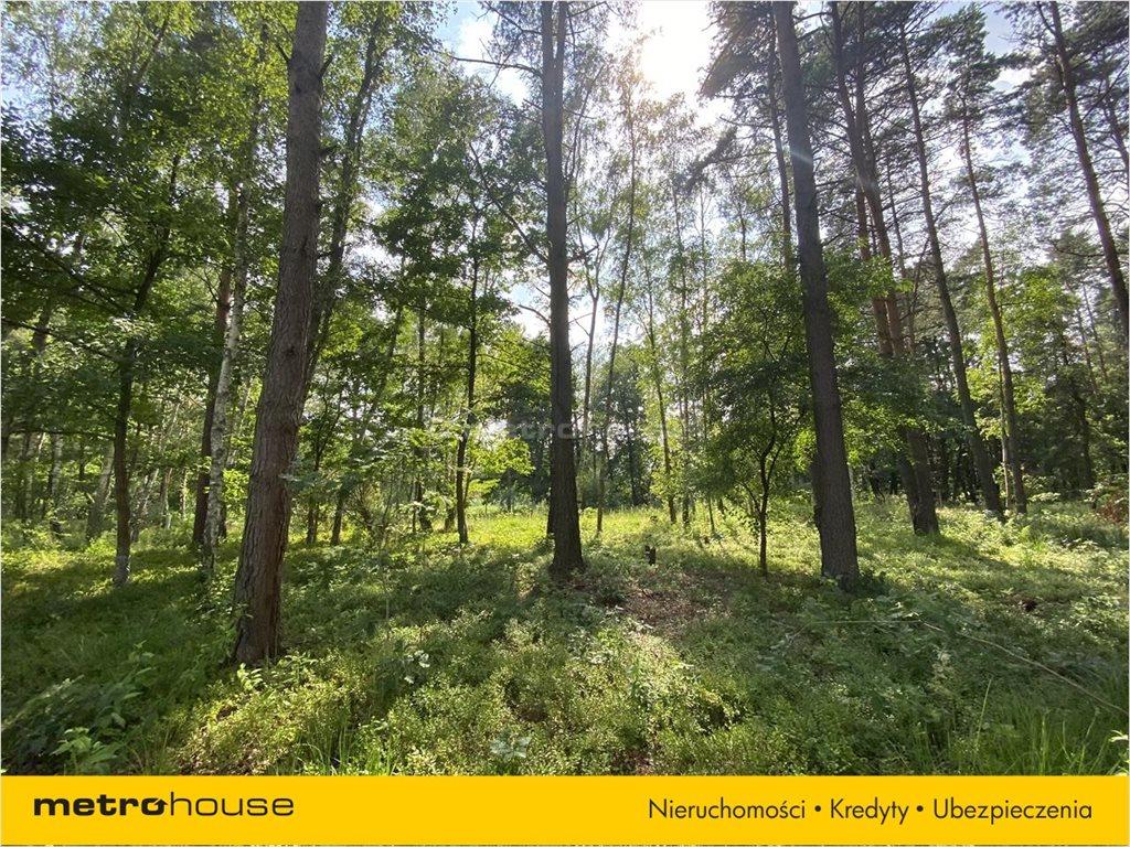 Działka leśna na sprzedaż Władysławów, Lesznowola  3128m2 Foto 5