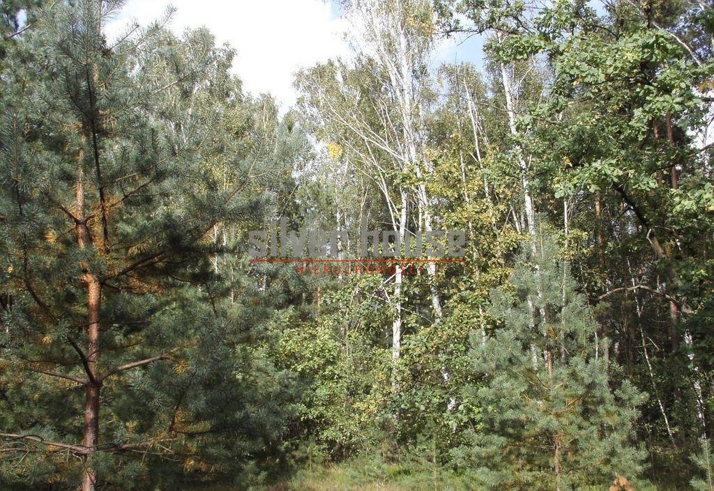 Działka siedliskowa na sprzedaż Boryszew  15000m2 Foto 4