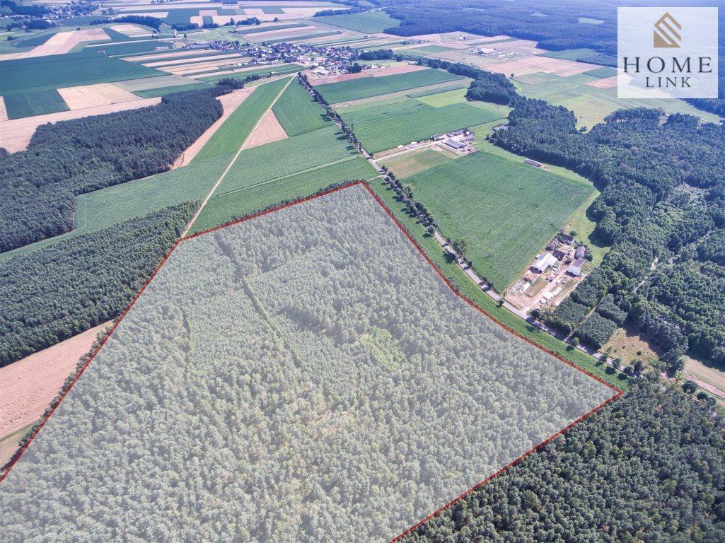 Działka leśna na sprzedaż Nowy Dwór  171900m2 Foto 3