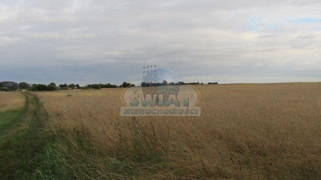 Działka rolna na sprzedaż Dolice  4800m2 Foto 3