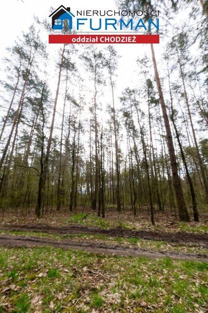 Działka leśna na sprzedaż Tarnowo  19800m2 Foto 3