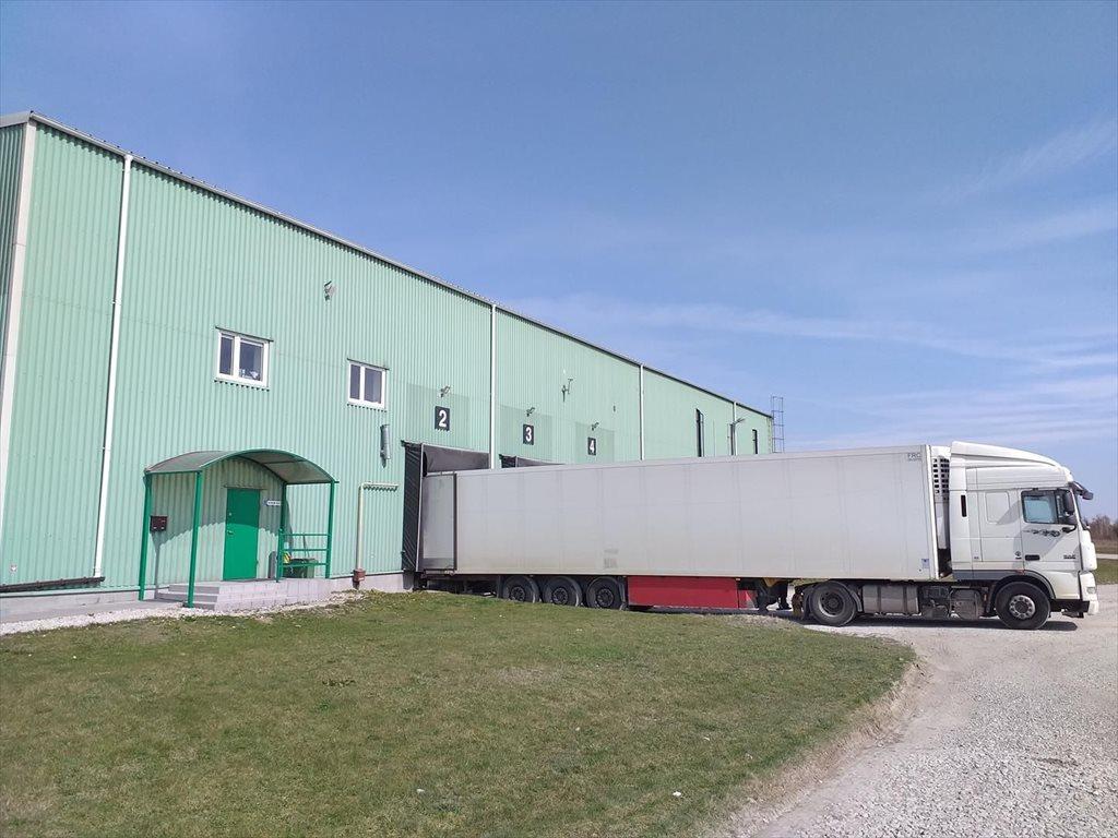 Lokal użytkowy na sprzedaż Borowina  2000m2 Foto 2