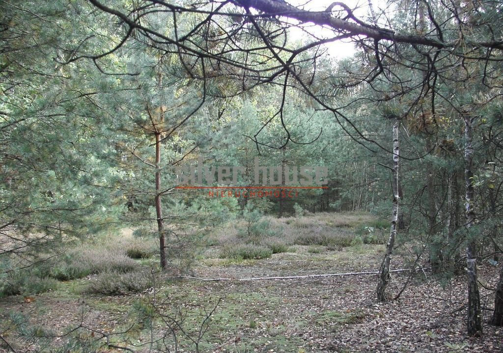 Działka siedliskowa na sprzedaż Boryszew  15000m2 Foto 5