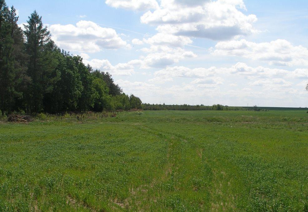 Działka rolna na sprzedaż Stara Dąbrowa  231300m2 Foto 1