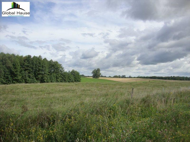 Działka leśna na sprzedaż Golubie  291650m2 Foto 7