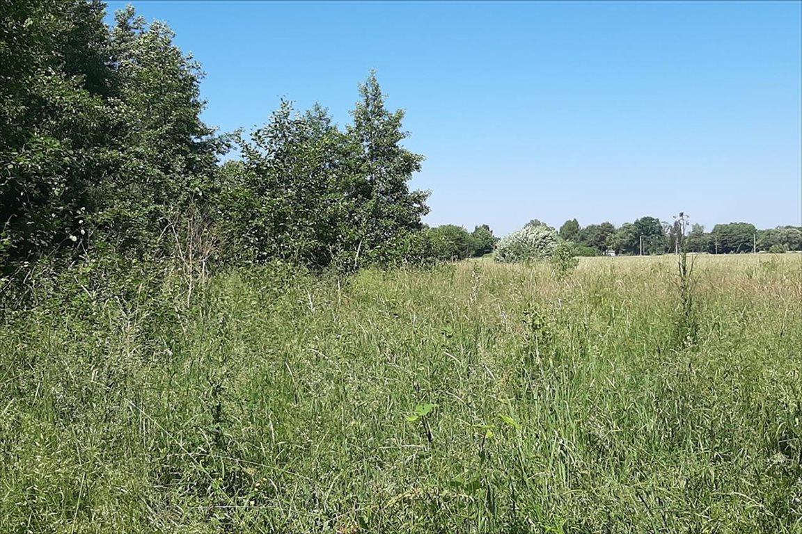 Działka rolna na sprzedaż Olszówka, Radziejowice  3500m2 Foto 2