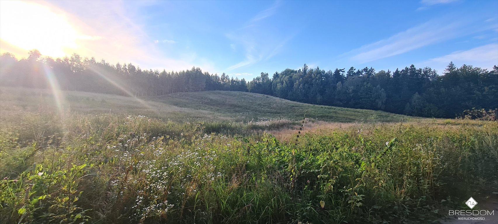 Działka rolna na sprzedaż Cerkiewnik  8467m2 Foto 5