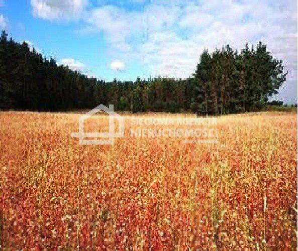 Działka rolna na sprzedaż Zielenin  43779m2 Foto 7