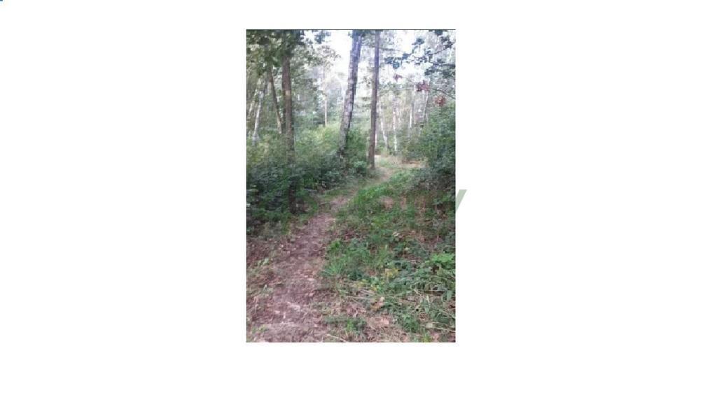 Działka leśna z prawem budowy na sprzedaż Książenice  4000m2 Foto 4