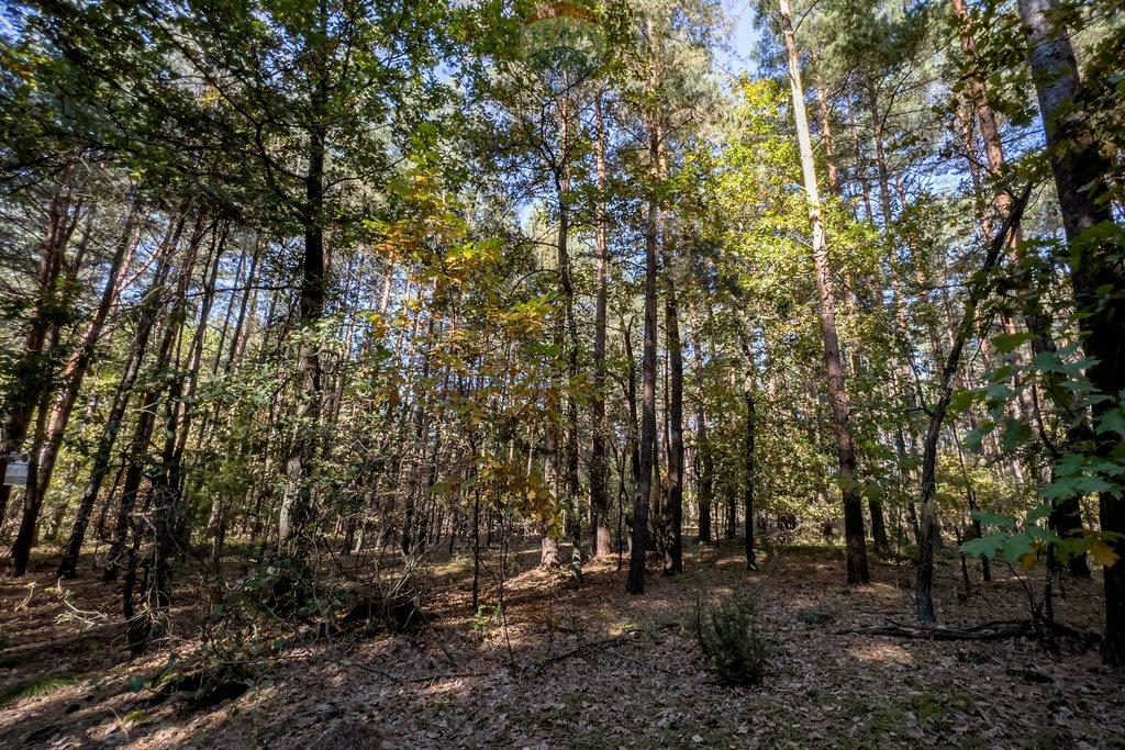 Działka leśna z prawem budowy na sprzedaż Czarnówka  15000m2 Foto 7