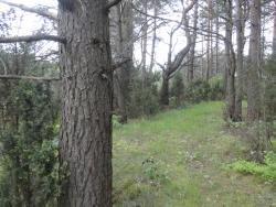 Działka leśna na sprzedaż Skroda Wielka  9200m2 Foto 1