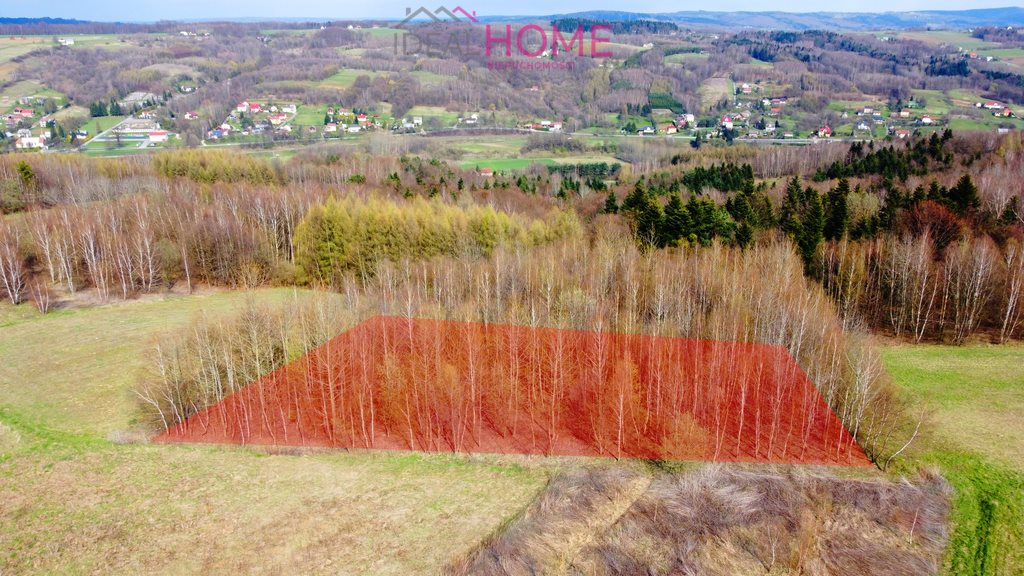 Działka leśna na sprzedaż Glinik Charzewski  4200m2 Foto 4