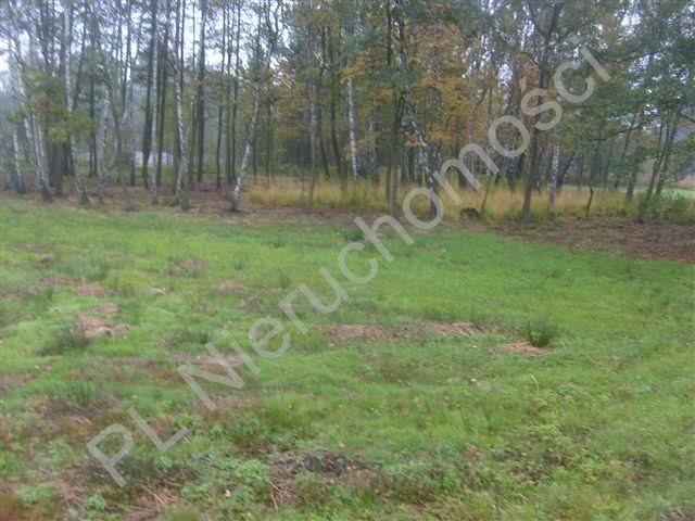 Działka rolna na sprzedaż Stare Budy  4239m2 Foto 3