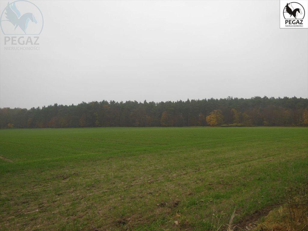 Działka rolna na sprzedaż Lechlin  50000m2 Foto 6