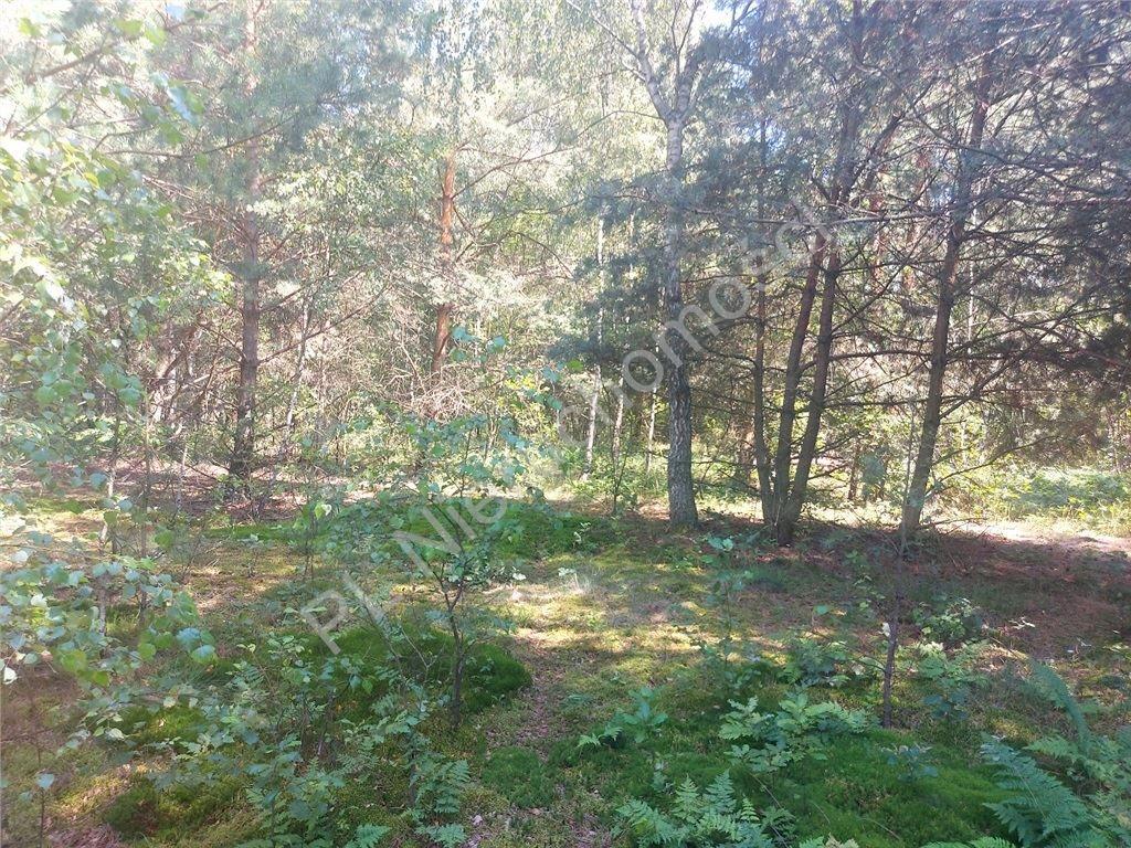 Działka rolna na sprzedaż Choiny  60500m2 Foto 7