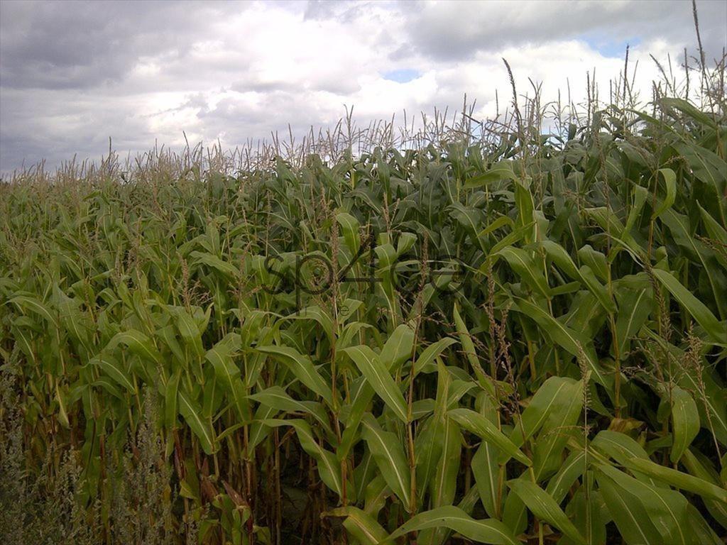 Działka rolna na sprzedaż Szczytno  1600000m2 Foto 10