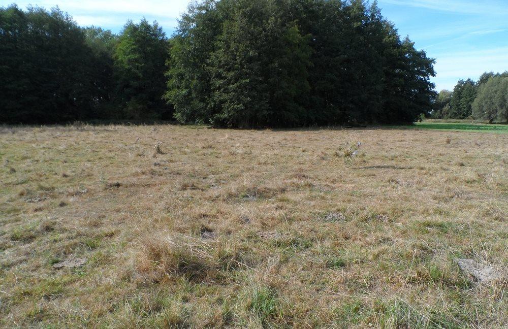 Działka siedliskowa na sprzedaż Nieborowo  11700m2 Foto 1