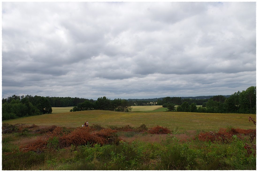 Działka rolna na sprzedaż Linia, Dębowa  12607m2 Foto 7