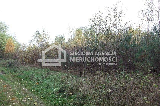Działka leśna na sprzedaż Stare Gronowo  49000m2 Foto 7