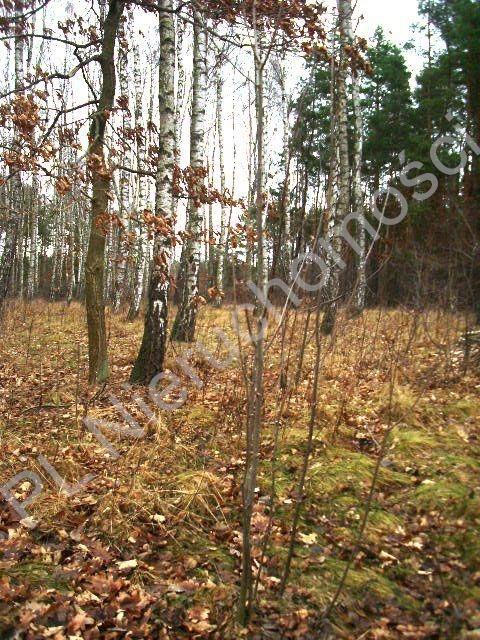 Działka leśna na sprzedaż Lesznowola  1918m2 Foto 1