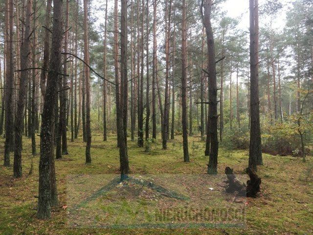 Działka leśna na sprzedaż Serock, las  3000m2 Foto 3