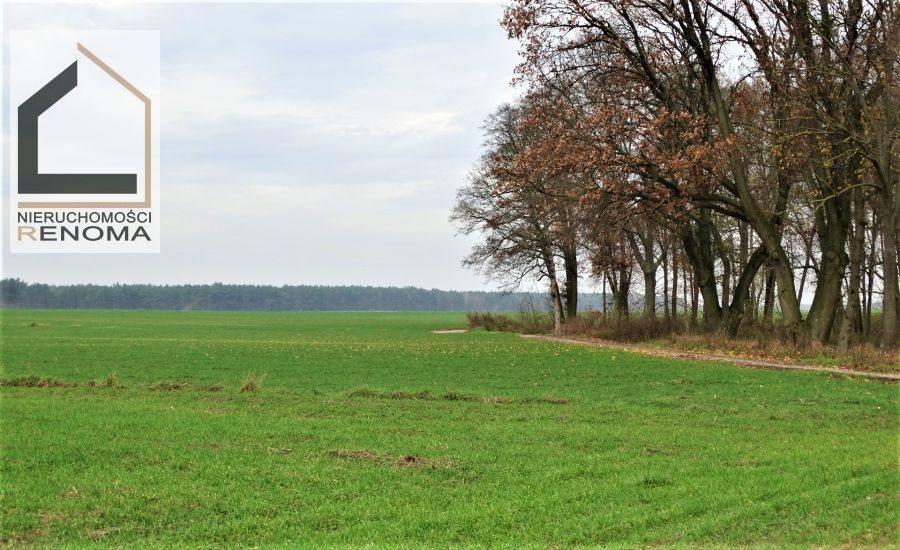 Działka rolna na sprzedaż Rościnno, , Rościnno, Skoki, Wągrowiec, Poznań  3500m2 Foto 2
