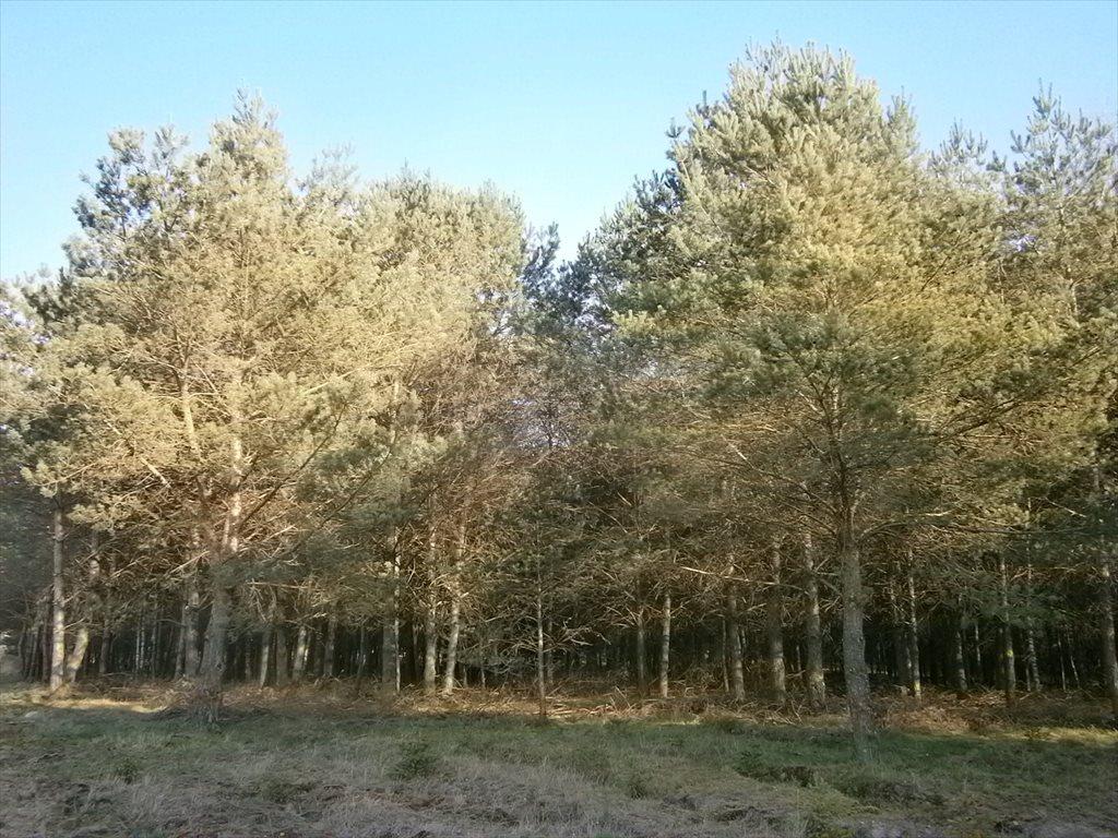 Działka leśna na sprzedaż Stara Wiśniewka  55661m2 Foto 7