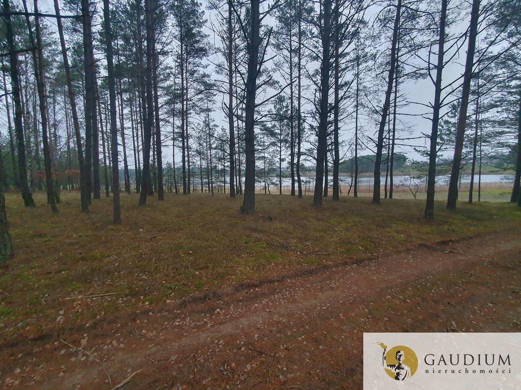 Działka leśna na sprzedaż Klocek  60000m2 Foto 10