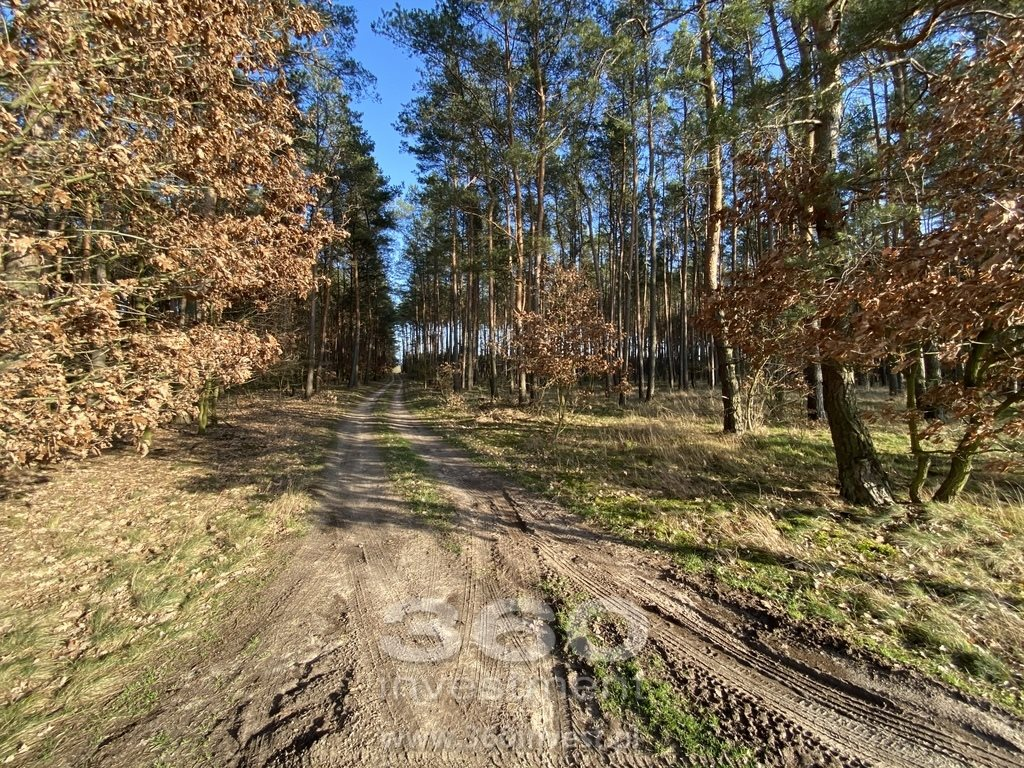 Działka leśna na sprzedaż Słonów  10800m2 Foto 3