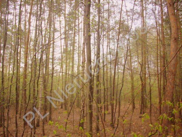 Działka rolna na sprzedaż Grzegorzewice  27500m2 Foto 1