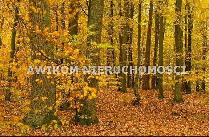 Działka leśna na sprzedaż Doleck  13844m2 Foto 1