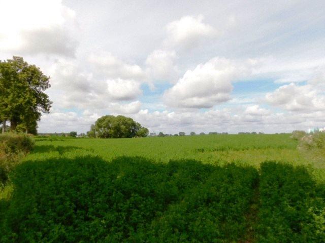Działka rolna na sprzedaż Szczepanki  92900m2 Foto 1