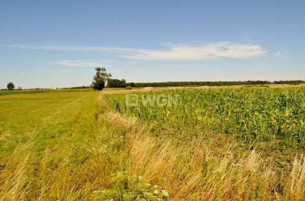 Działka rolna na sprzedaż Piersna, Piersna  8739m2 Foto 5