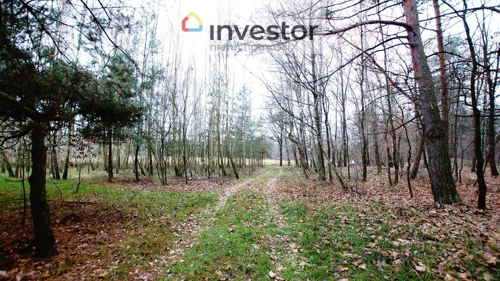 Działka leśna z prawem budowy na sprzedaż Bukowa Wielka  39157m2 Foto 2