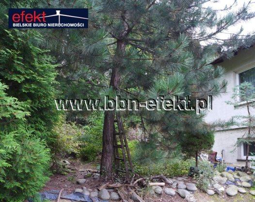 Dom na sprzedaż Bielsko-Biała, Kamienica  330m2 Foto 1