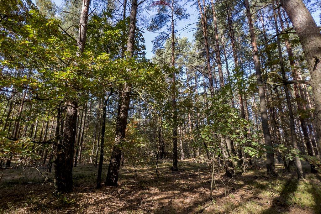 Działka leśna z prawem budowy na sprzedaż Czarnówka  15000m2 Foto 8