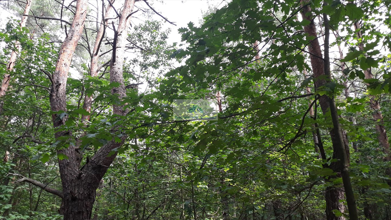 Działka leśna na sprzedaż Warszawa, Wawer, Międzylesie, Torfowa  3456m2 Foto 2