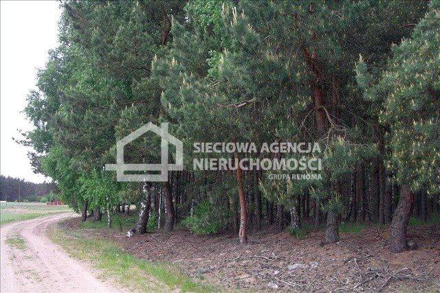 Działka leśna na sprzedaż Czarniż  44100m2 Foto 4