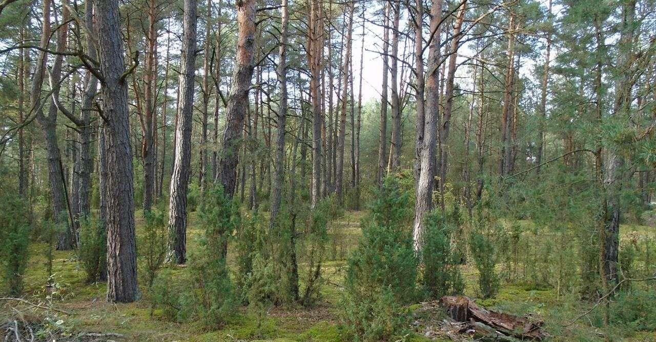 Działka leśna na sprzedaż Grudunki  140100m2 Foto 3