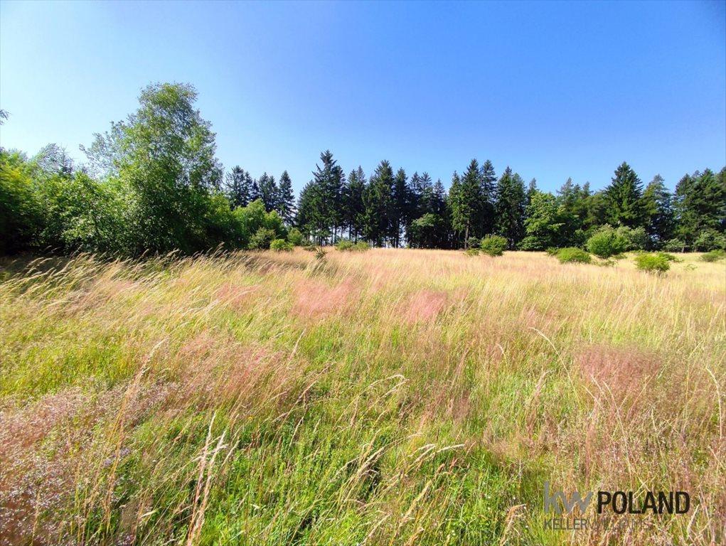 Działka rolna na sprzedaż Kudowa-Zdrój, Pstrążna  7709m2 Foto 12