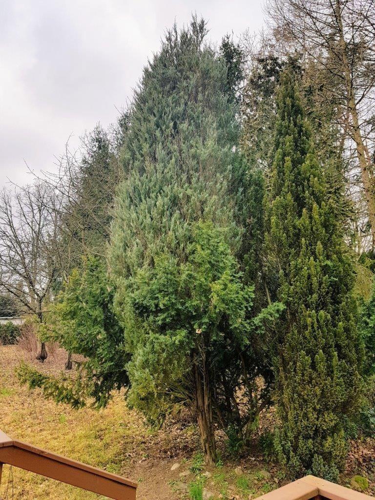 Dom na sprzedaż Popowo-Parcele, Storczykowa  2020m2 Foto 1