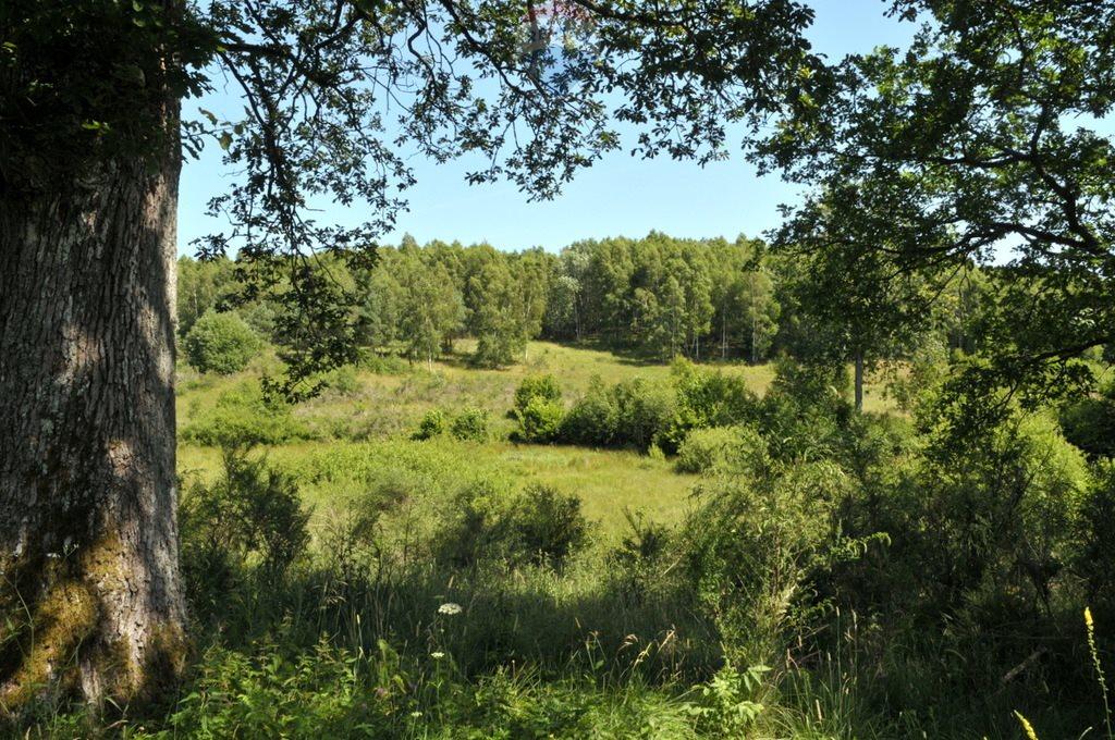 Działka leśna na sprzedaż Objezierze  244300m2 Foto 2