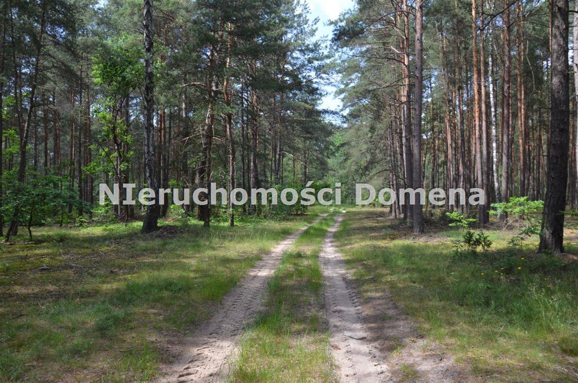 Działka leśna na sprzedaż Poświętne  11400m2 Foto 3