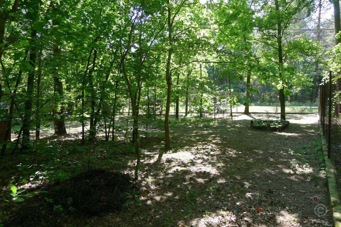 Działka leśna na sprzedaż Jedlicze A  1000m2 Foto 3