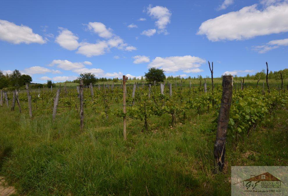 Działka rolna na sprzedaż Węgierka  11700m2 Foto 4