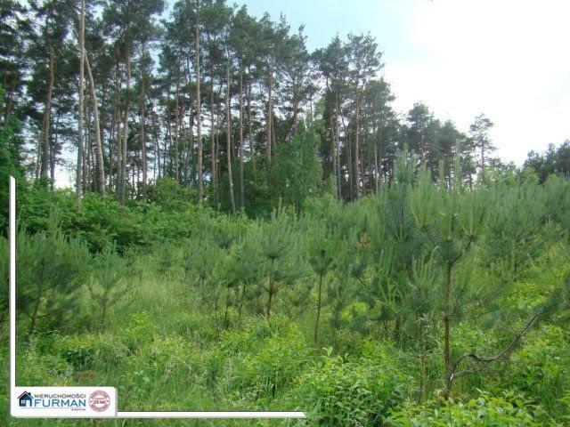 Działka leśna na sprzedaż Studzieniec  4700m2 Foto 1
